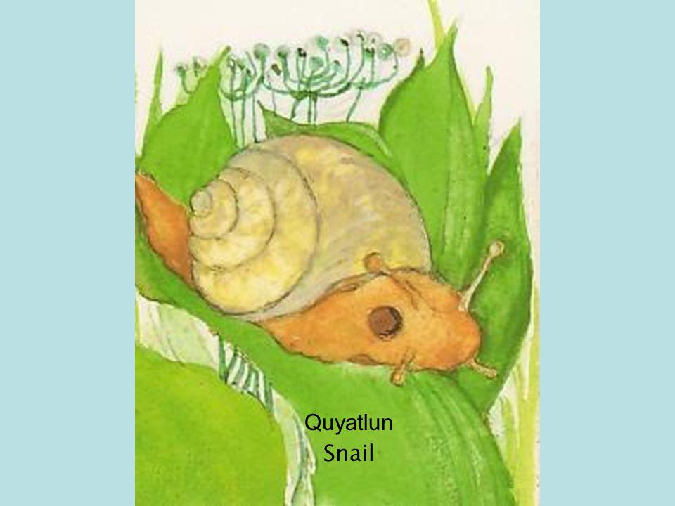 Quyatlun Snail