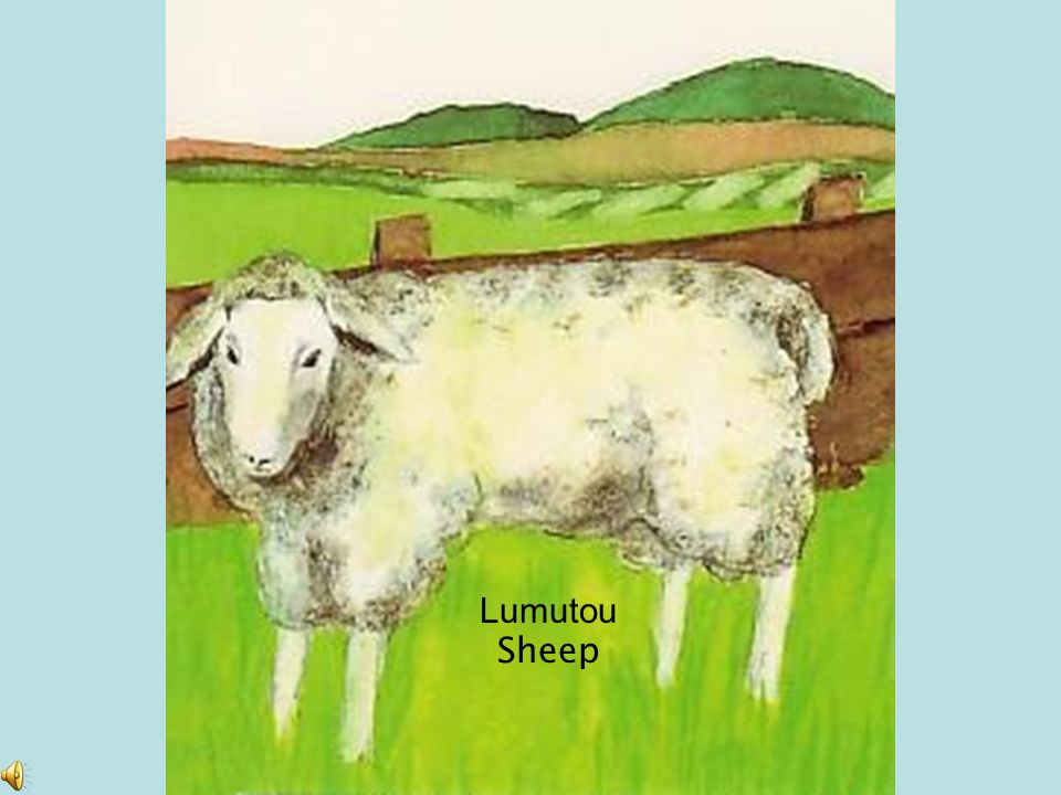 Lumutou Sheep