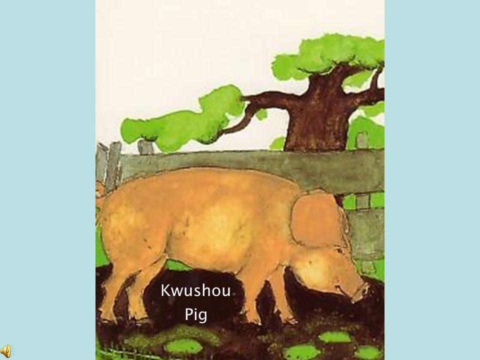 Kwushou Pig