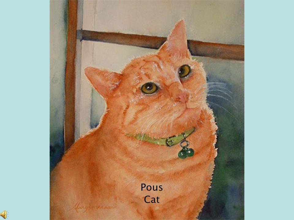 Pous Cat
