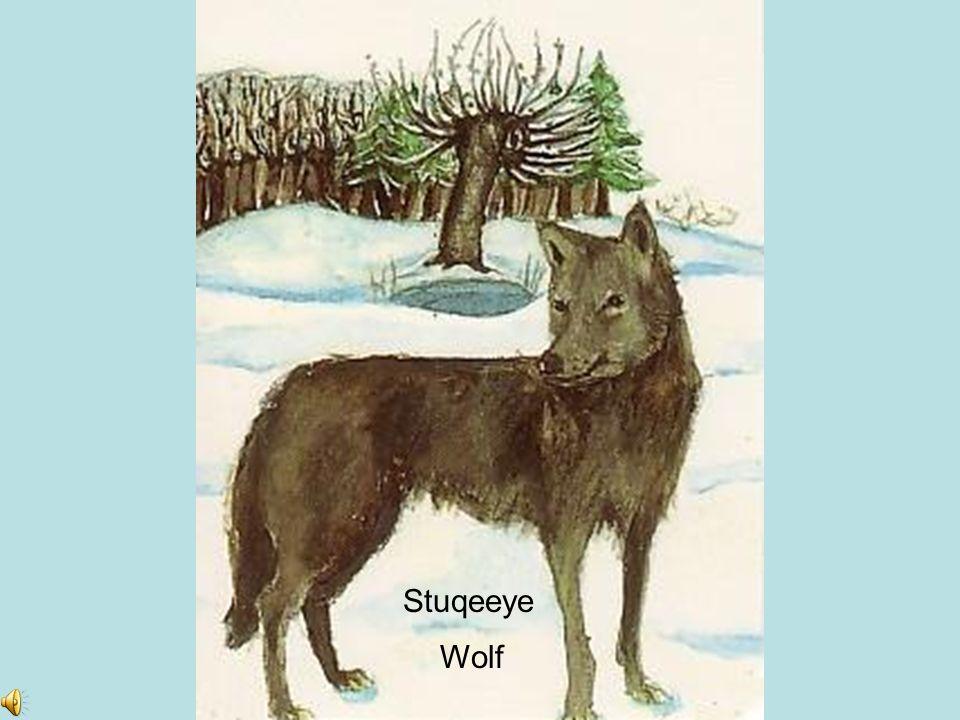Stuqeeye Wolf