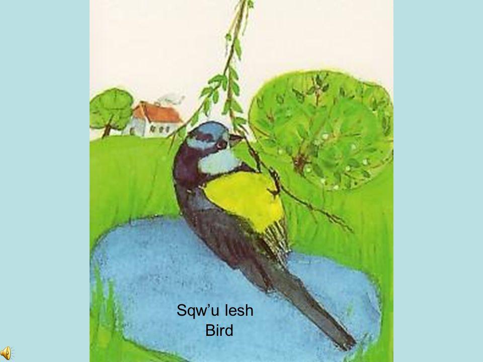 Sqw'u lesh Bird