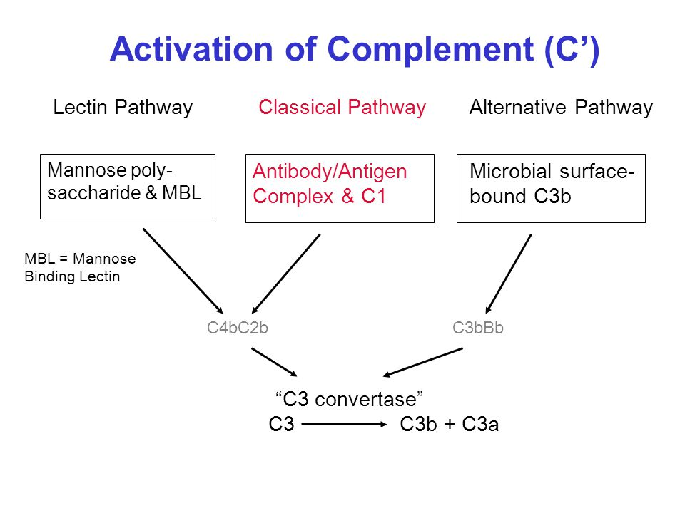 Activation of Complement (C')