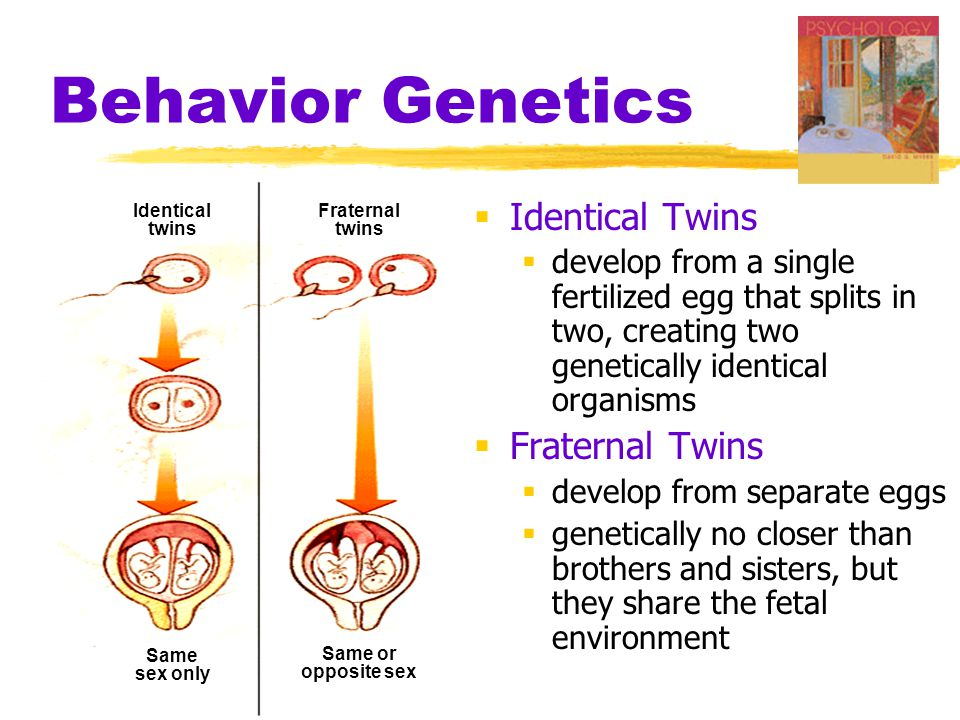 Behavior Genetics Identical Twins Fraternal Twins