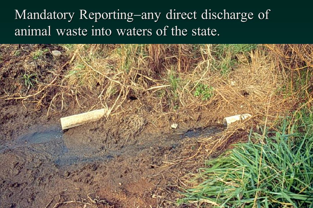 Mandatory Reporting-any direct discharge of animal waste into waters of the state.