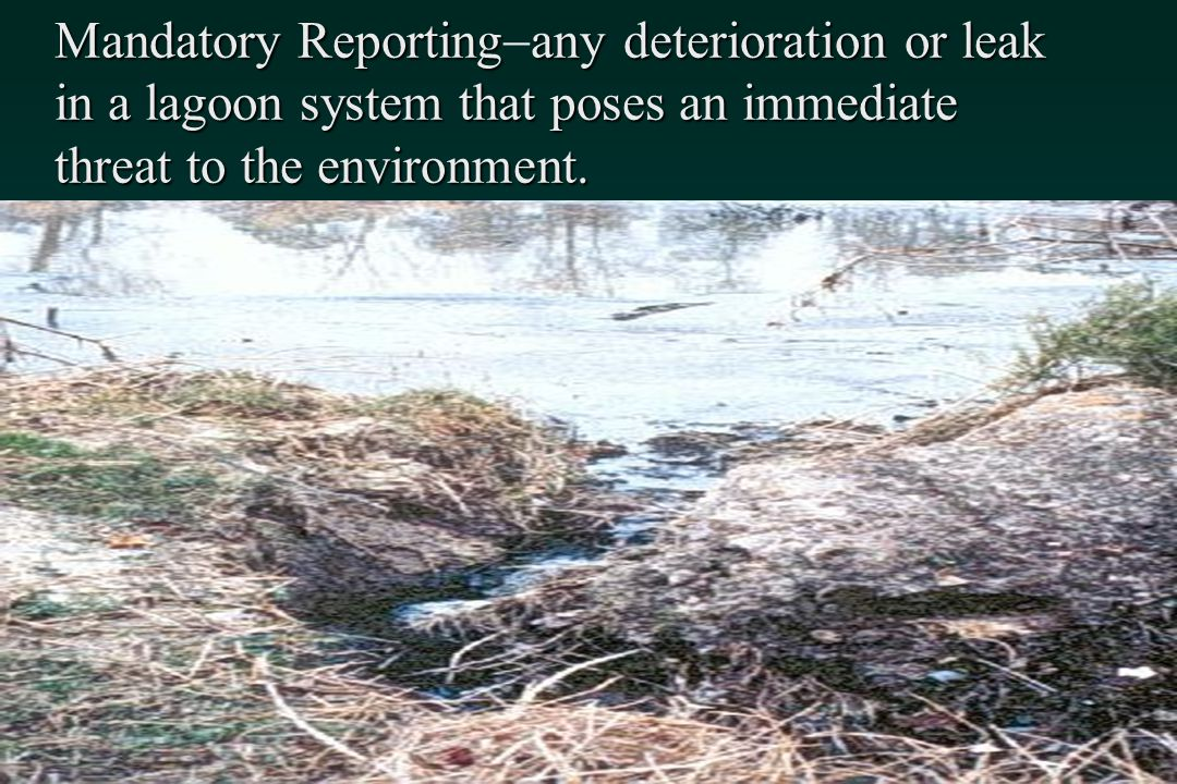 Mandatory Reporting-any deterioration or leak in a lagoon system that poses an immediate threat to the environment.