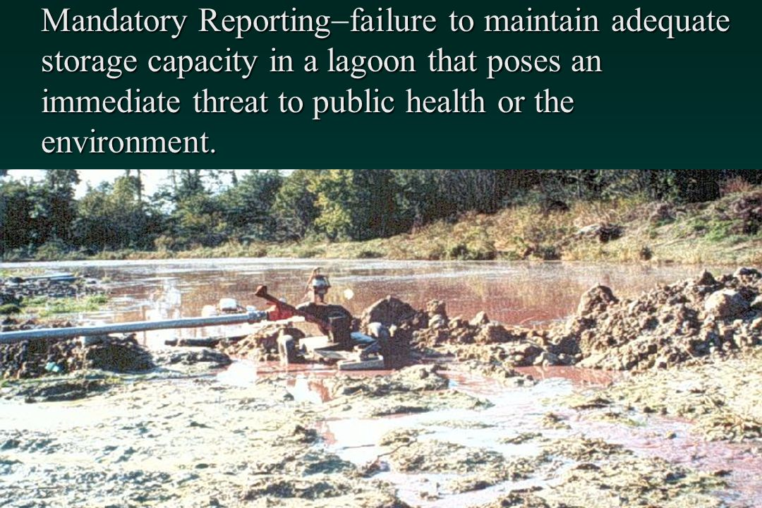 Mandatory Reporting-failure to maintain adequate storage capacity in a lagoon that poses an immediate threat to public health or the environment.