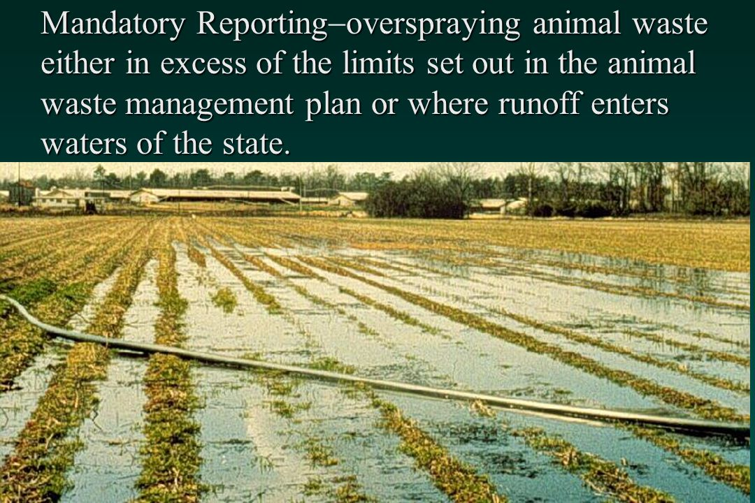 Mandatory Reporting-overspraying animal waste either in excess of the limits set out in the animal waste management plan or where runoff enters waters of the state.