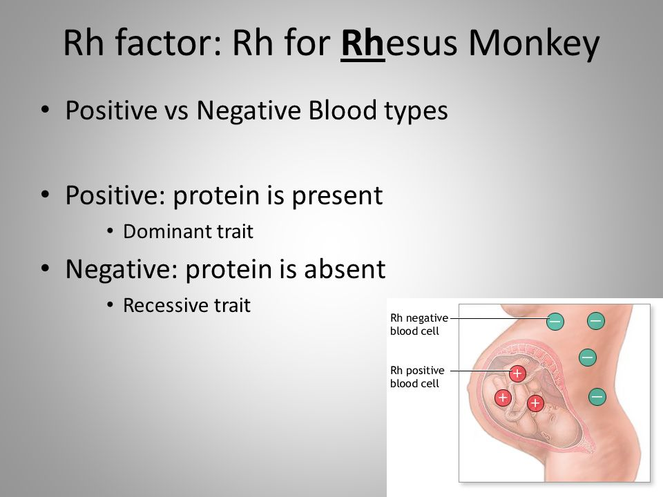 Rh factor: Rh for Rhesus Monkey