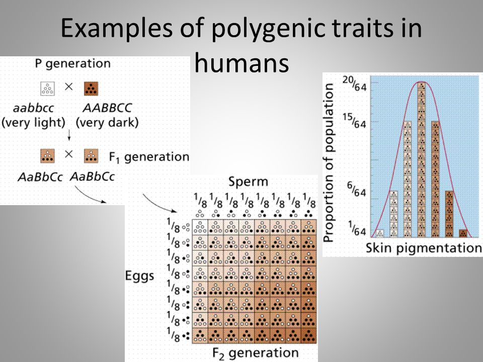 Examples of polygenic traits in humans