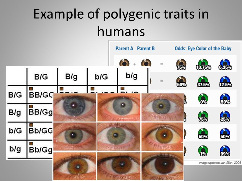 Example of polygenic traits in humans
