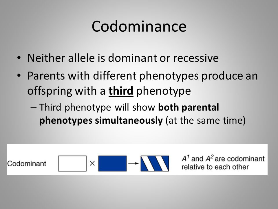 Codominance Neither allele is dominant or recessive