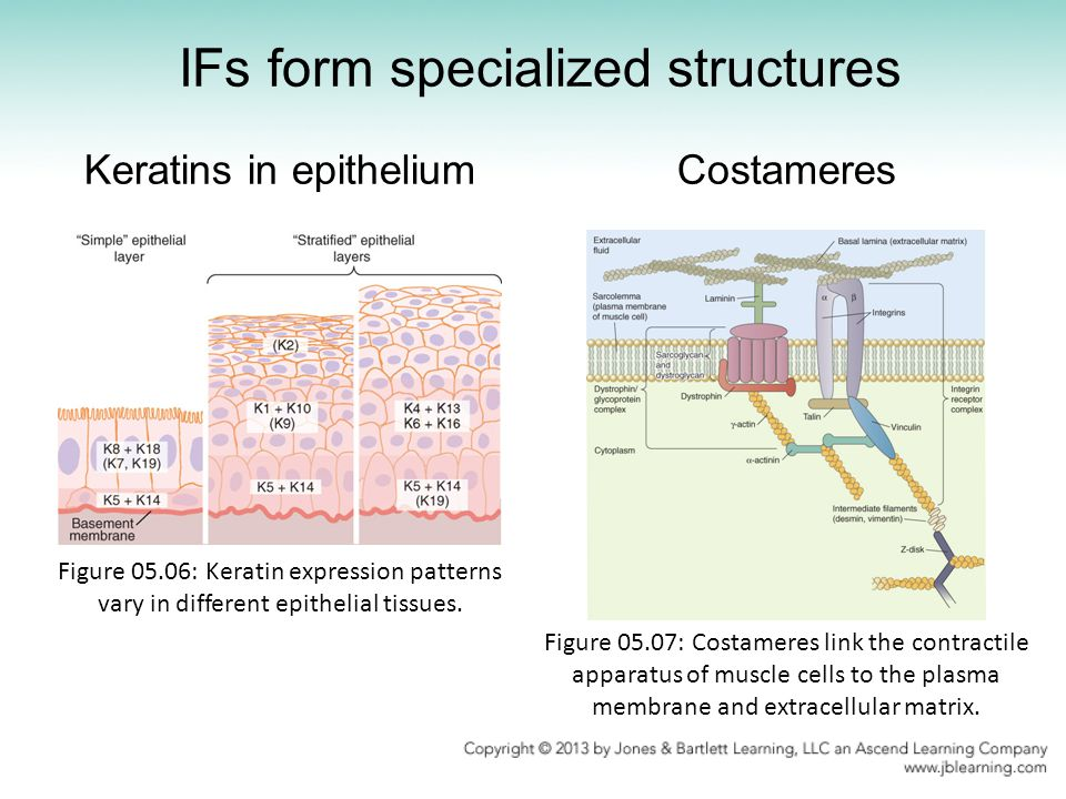 IFs form specialized structures