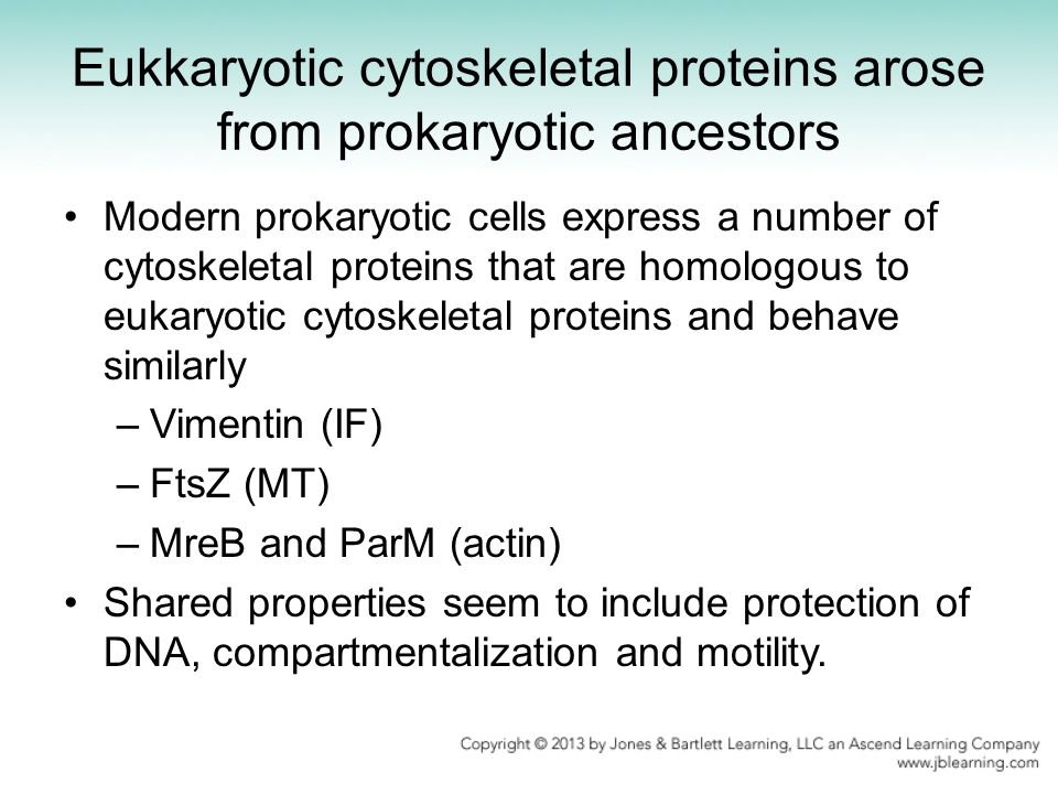 Eukkaryotic cytoskeletal proteins arose from prokaryotic ancestors