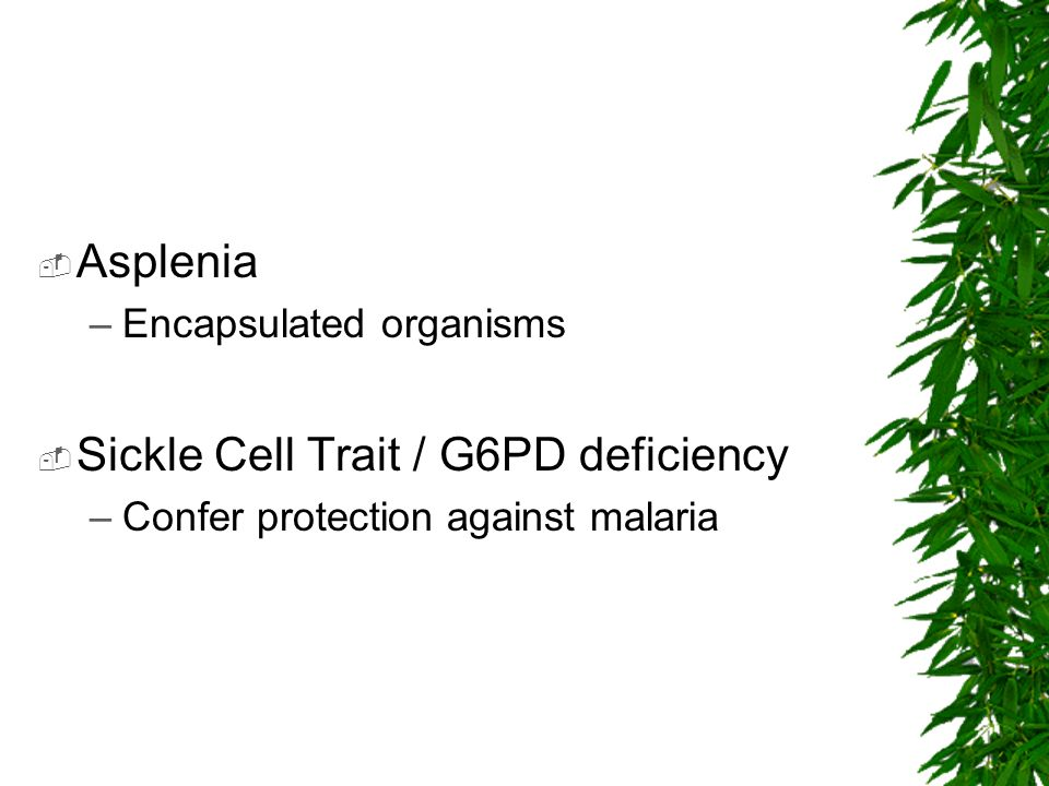 Sickle Cell Trait / G6PD deficiency