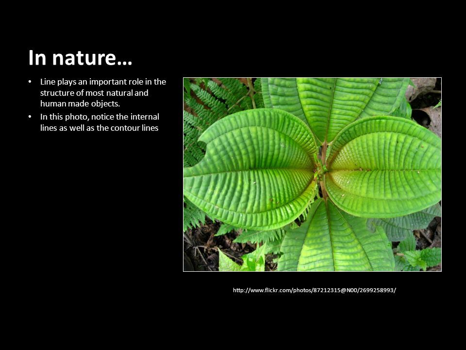 In nature… Line plays an important role in the structure of most natural and human made objects.