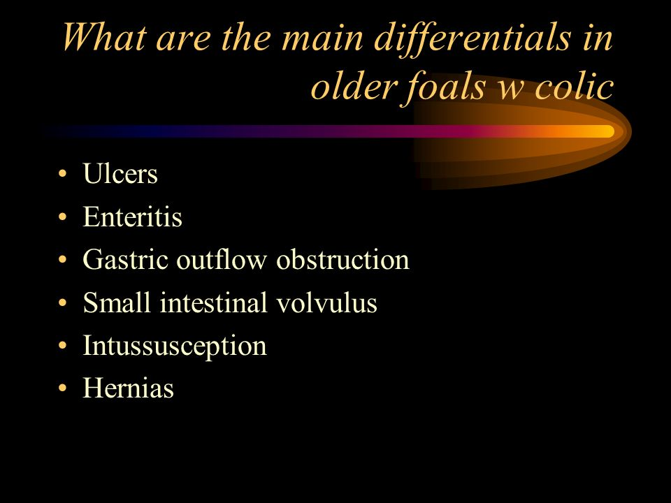 What are the main differentials in older foals w colic