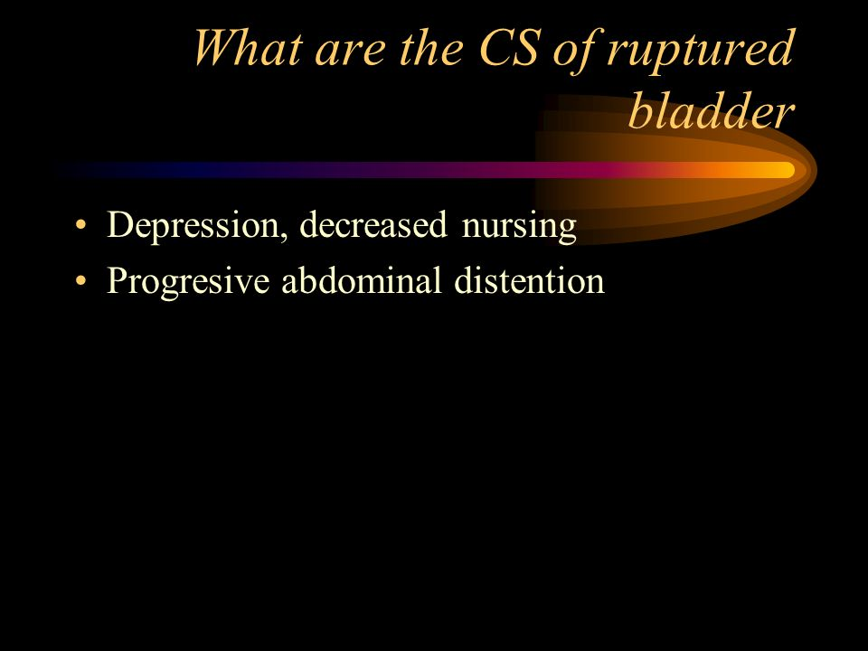 What are the CS of ruptured bladder