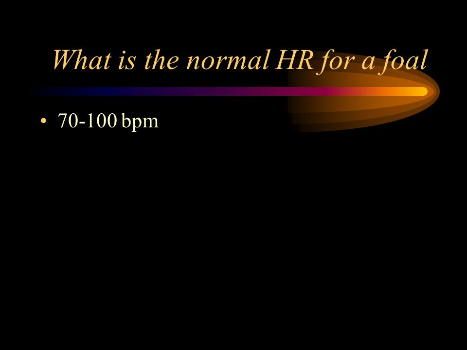 What is the normal HR for a foal