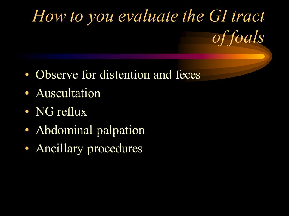 How to you evaluate the GI tract of foals