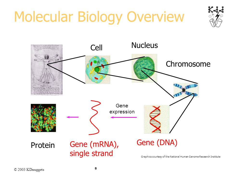 Molecular Biology Overview