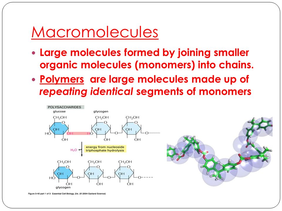 Macromolecules Large molecules formed by joining smaller organic molecules (monomers) into chains.