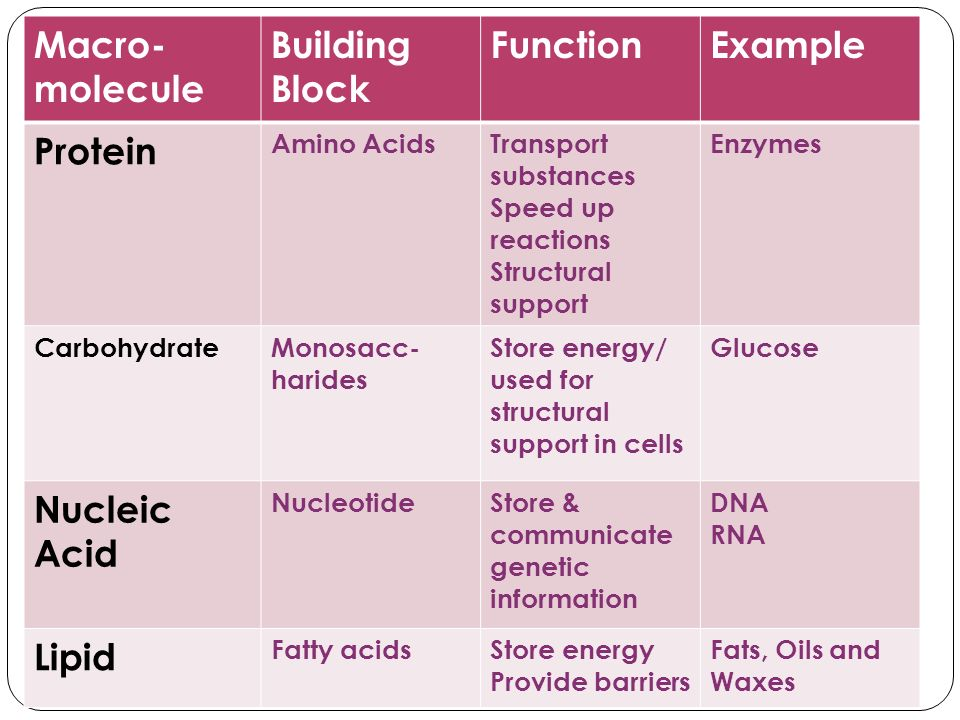 Macro- molecule Building Block Function Example Protein Nucleic Acid