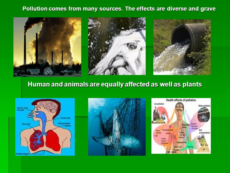 Human and animals are equally affected as well as plants