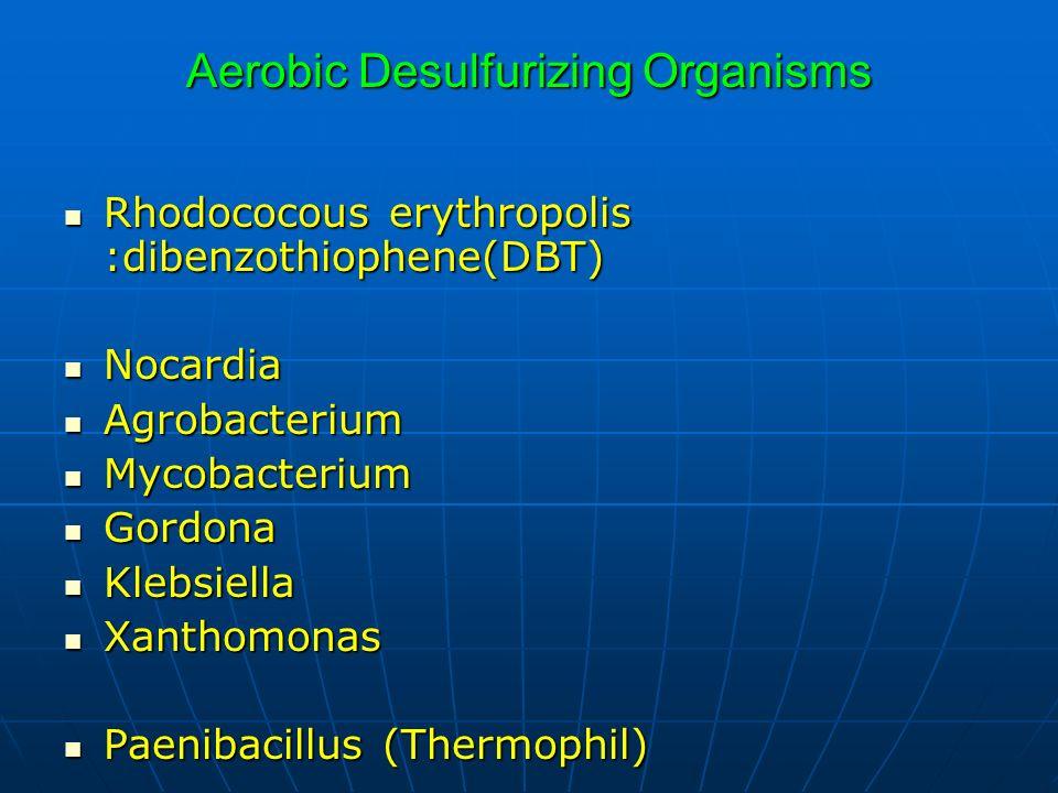 Aerobic Desulfurizing Organisms