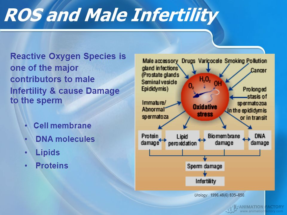 ROS and Male Infertility