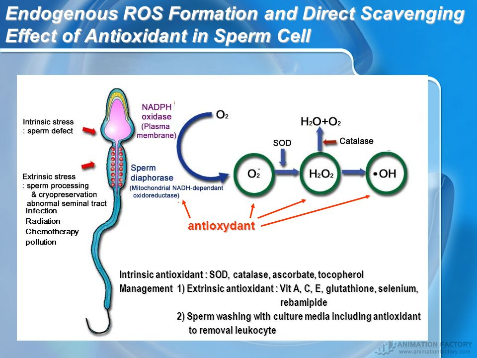 Endogenous ROS Formation and Direct Scavenging Effect of Antioxidant in Sperm Cell