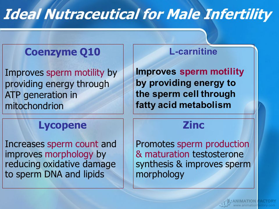 Ideal Nutraceutical for Male Infertility