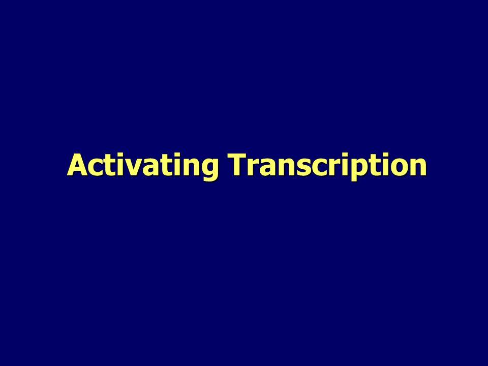 Activating Transcription