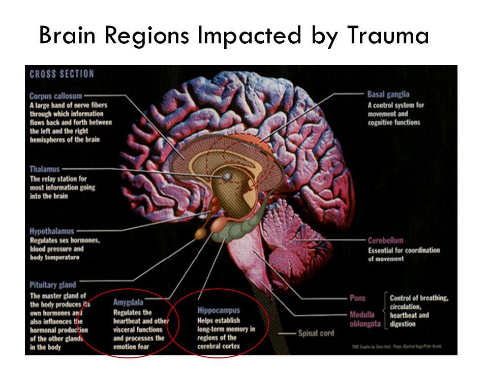 Brain Regions Impacted by Trauma