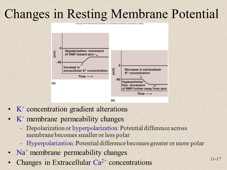 Changes in Resting Membrane Potential