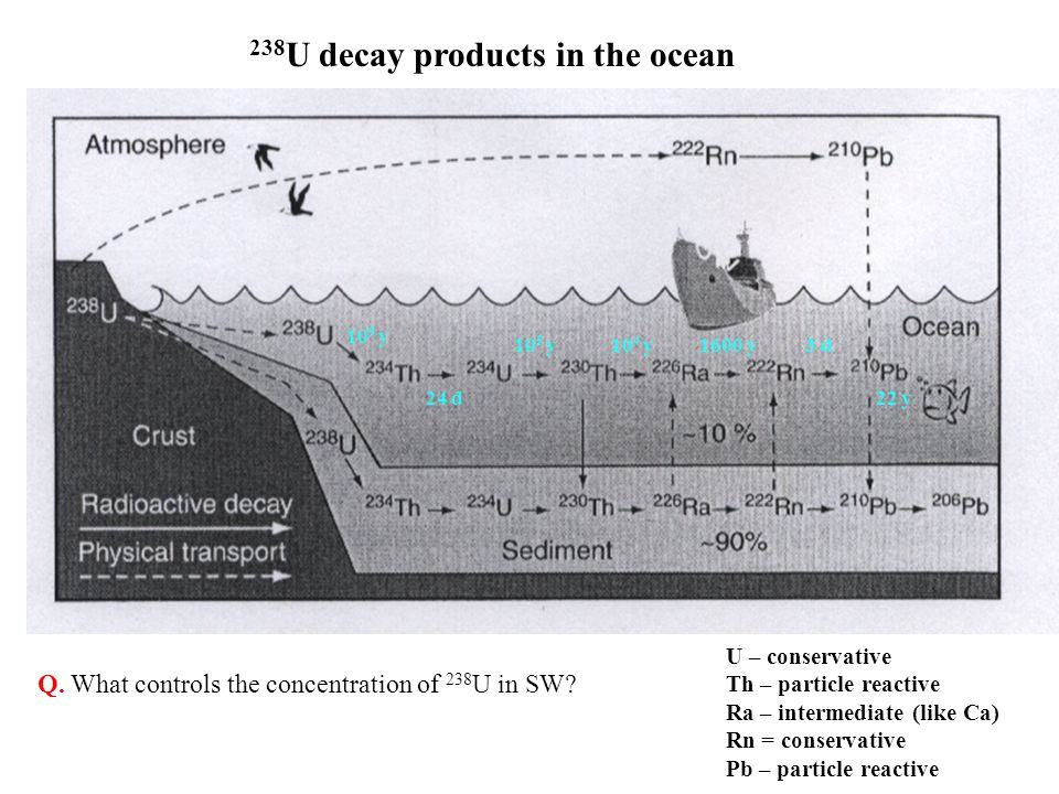 238U decay products in the ocean