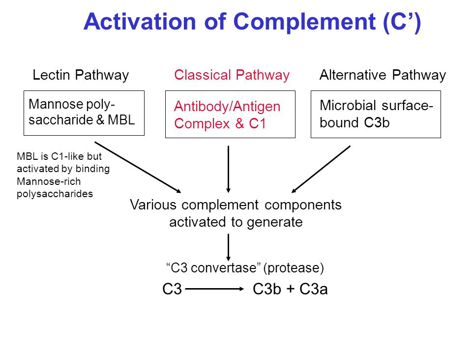 Various complement components activated to generate