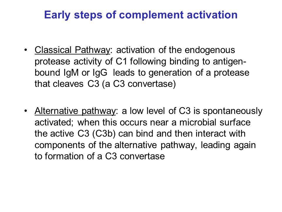 Early steps of complement activation
