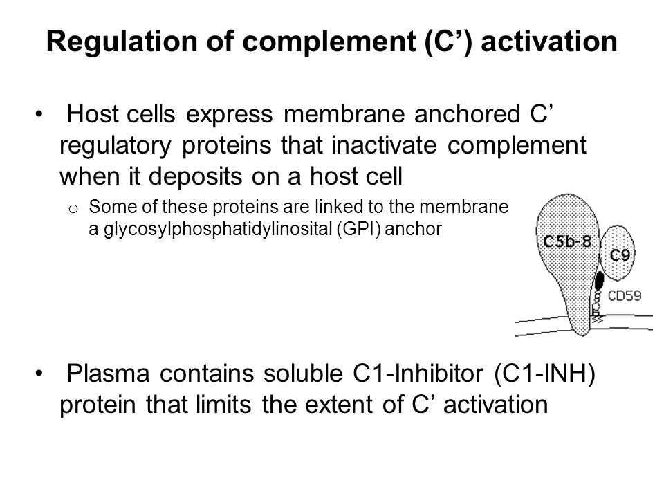 Regulation of complement (C') activation
