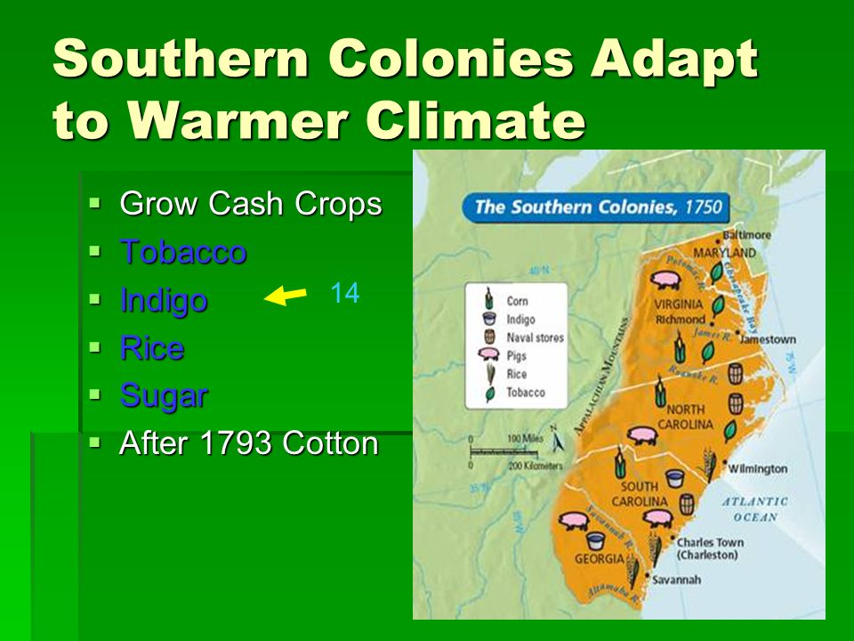 Southern Colonies Adapt to Warmer Climate