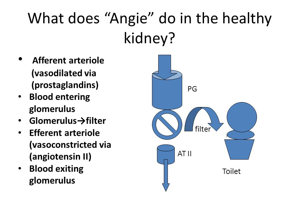 What does Angie do in the healthy kidney
