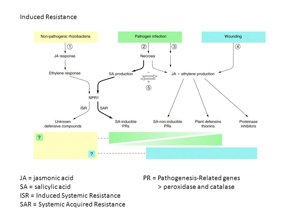 Induced Resistance JA = jasmonic acid. SA = salicylic acid. ISR = Induced Systemic Resistance. SAR = Systemic Acquired Resistance.