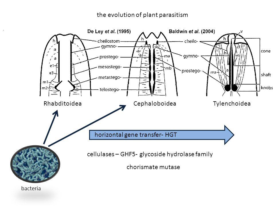 horizontal gene transfer- HGT