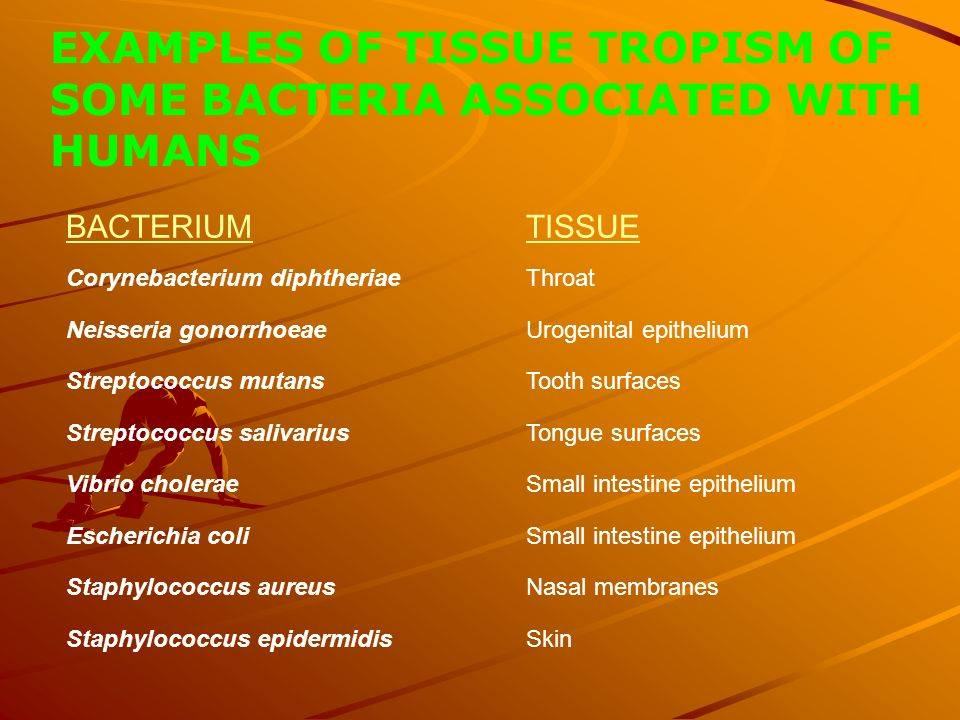 EXAMPLES OF TISSUE TROPISM OF SOME BACTERIA ASSOCIATED WITH HUMANS