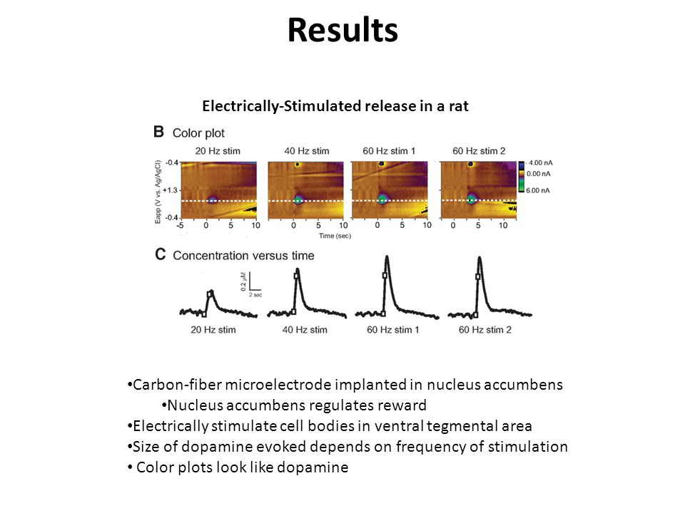 Results Electrically-Stimulated release in a rat
