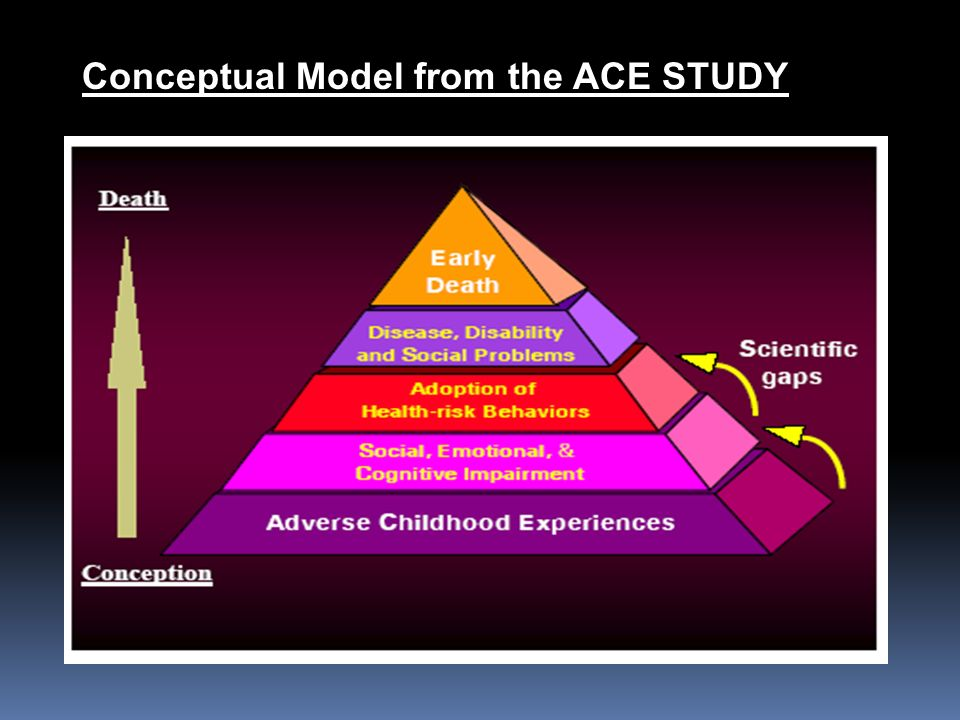 Conceptual Model from the ACE STUDY