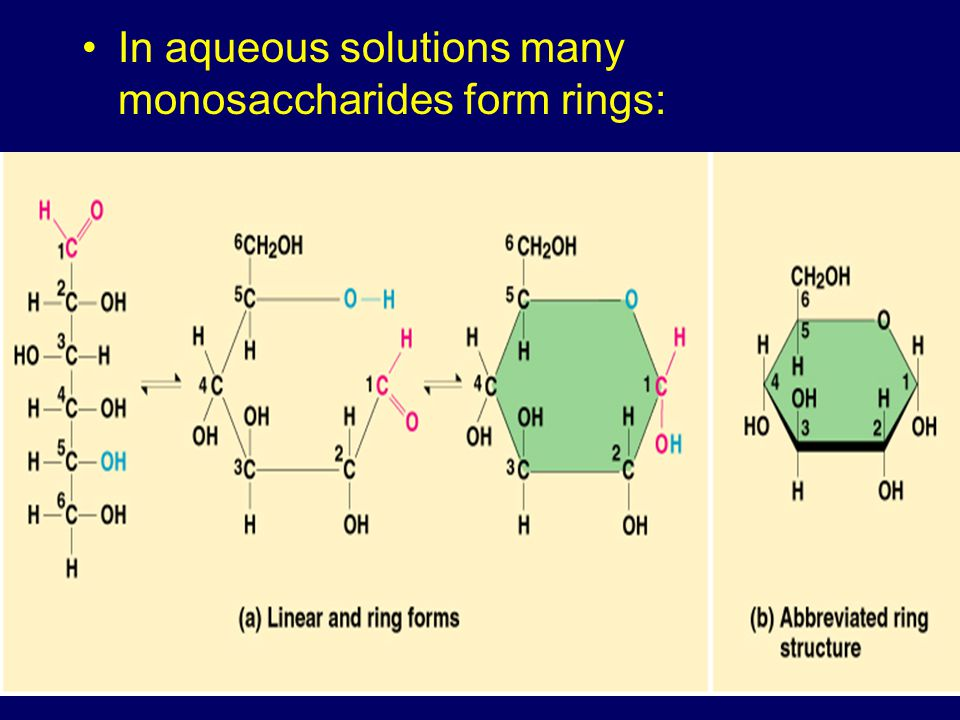 In aqueous solutions many monosaccharides form rings: