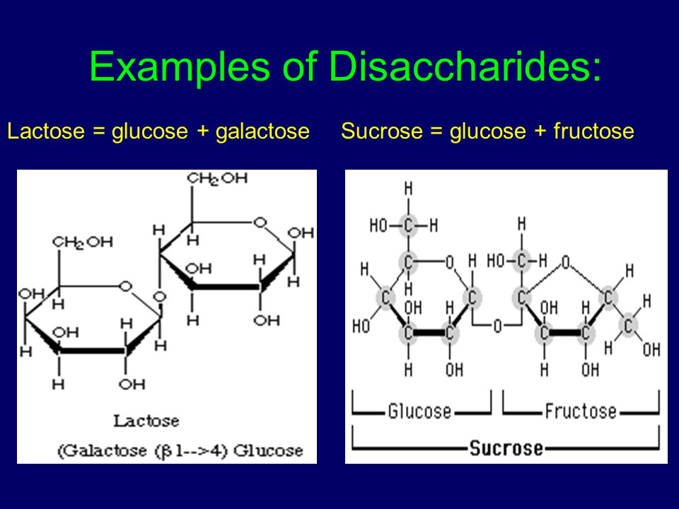 Examples of Disaccharides: