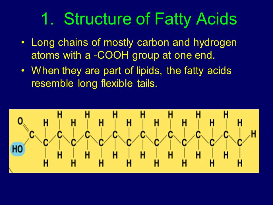 1. Structure of Fatty Acids