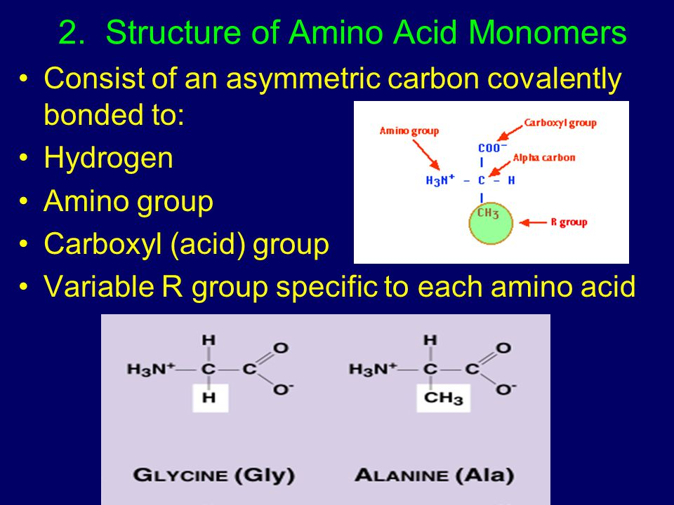 2. Structure of Amino Acid Monomers